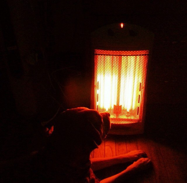 Cozy rainy nights with your's truly! Season's Greetings! 🕯☕️🐕☃🎄🎁 #nofilter #philapets #philly #rittenhouse #dogwalking #seasonsgreetings #instacute #petsitting #friskyinphilly #cozynights