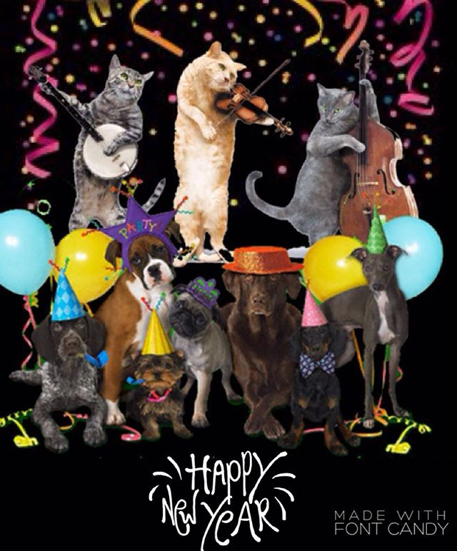 🎉🐩HAPPY NEW YEAR🐈🎉 🎈🎈🎈🎈🎈🎈🎈🎈🎈🎈 What a great way to bring in the New Year by having your pets making new friends win #philapets team. Our Pet Care Specialist are happy to care for philly's best pets. Give us a call to learn more about our services 215-893-0894 !!!#rittenhouse #2016 #happynewyears #dogwalking #petsitting #philly #philadelphia #welovedogs #welovecats #instacute #party