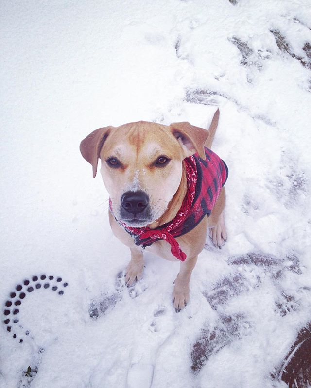 Yes finally some action! ☃🐕☃ #philly #northernliberties #friskyinphilly #dogwalking #petsitting #attitude #dogsofinstagram #snowday