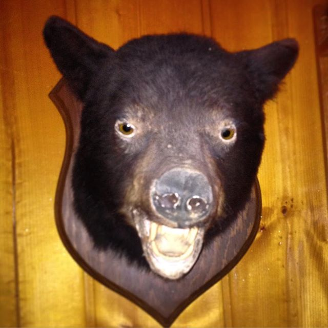 Old Fred Bear. #tuesdaytaxidermy #taxidermytuesday