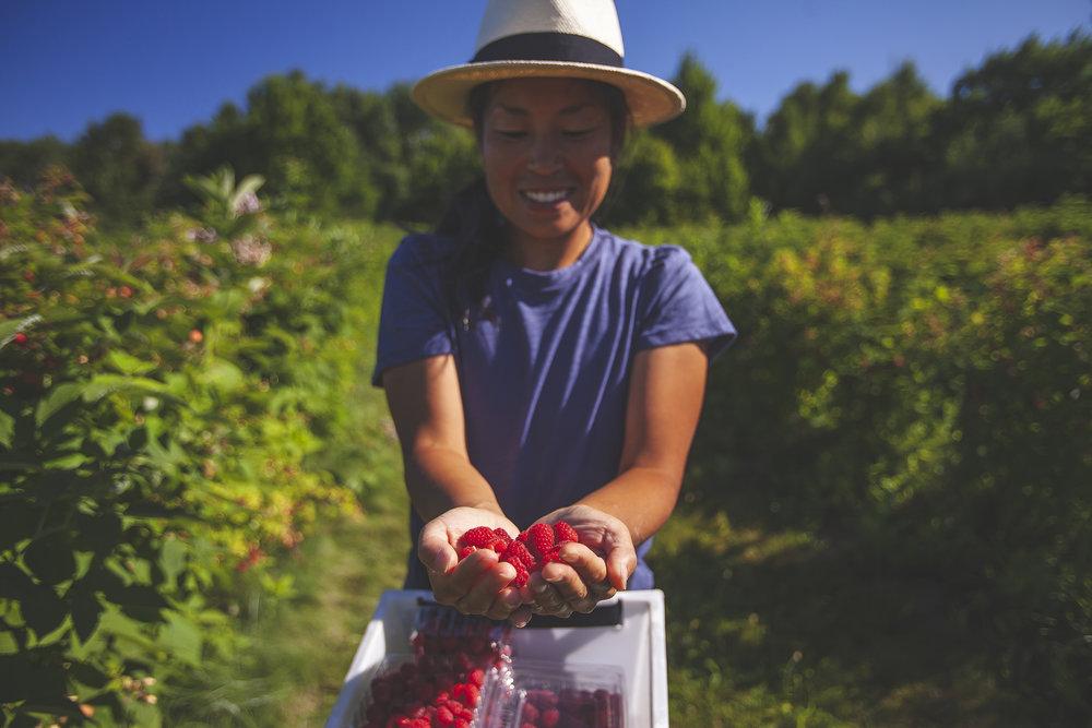 Raspberries-BlueVista.jpg