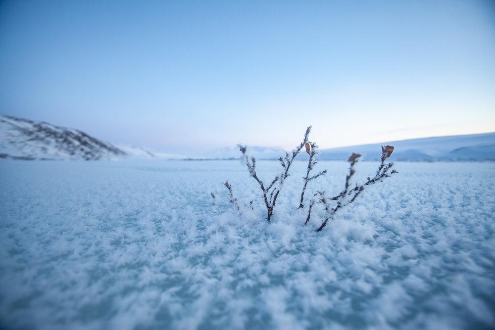 Frost on the Hula Hula River.