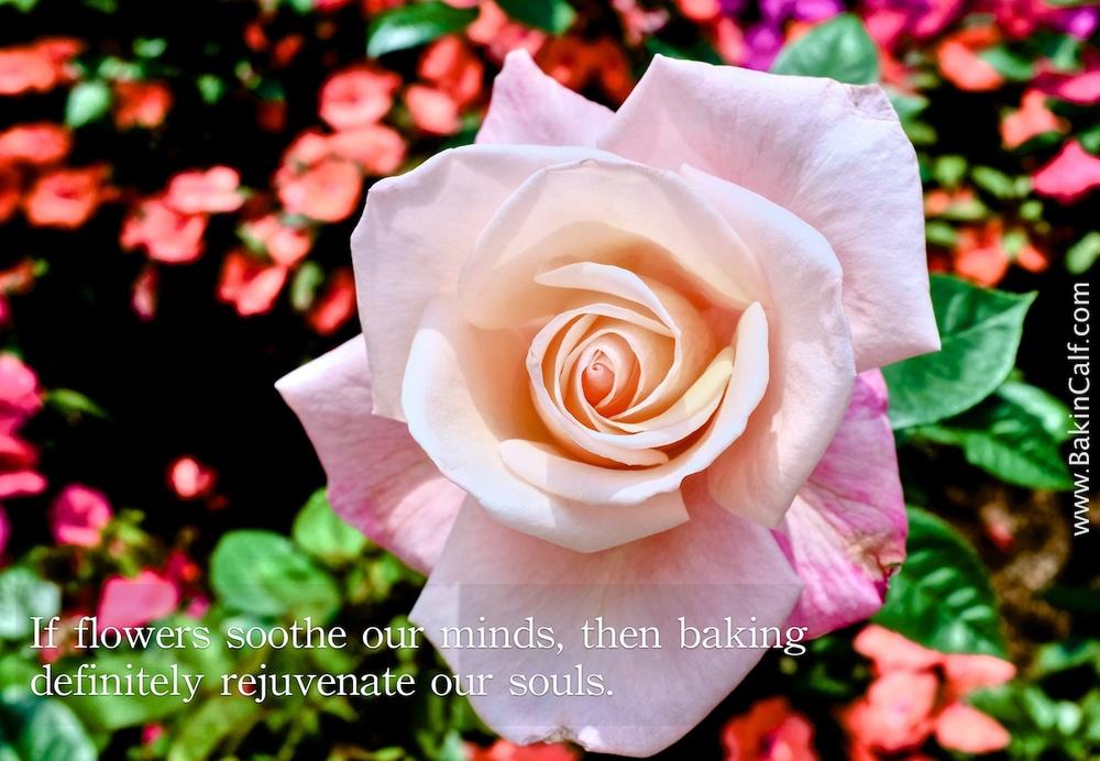 flower_rejunvenate.jpg