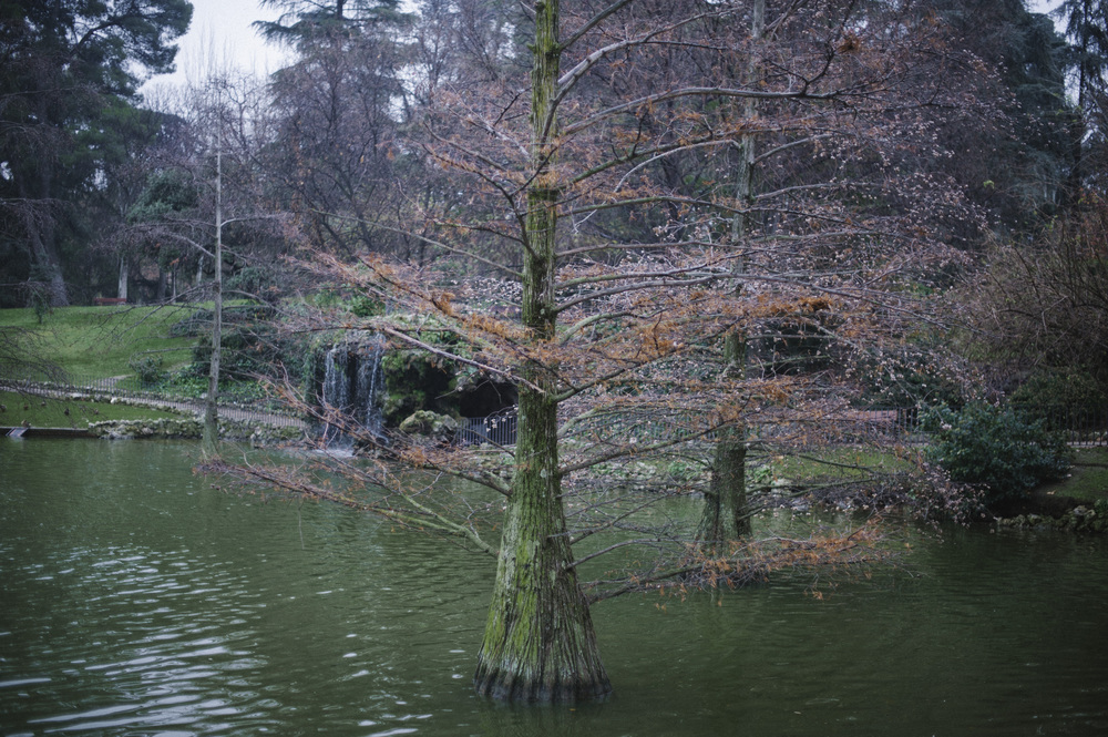 treespond.jpg