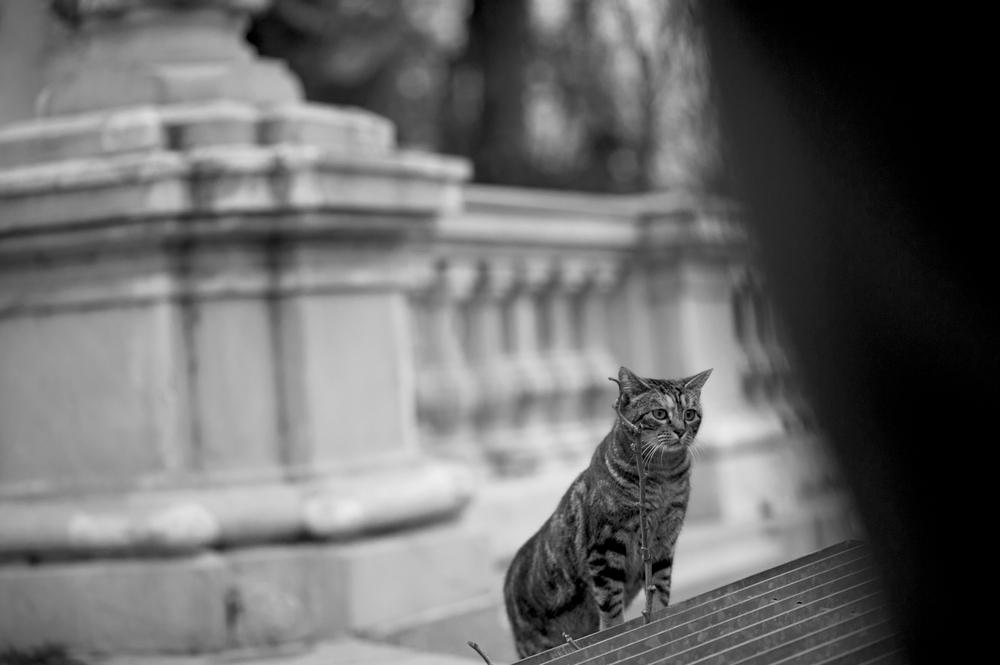 catshadow.jpg