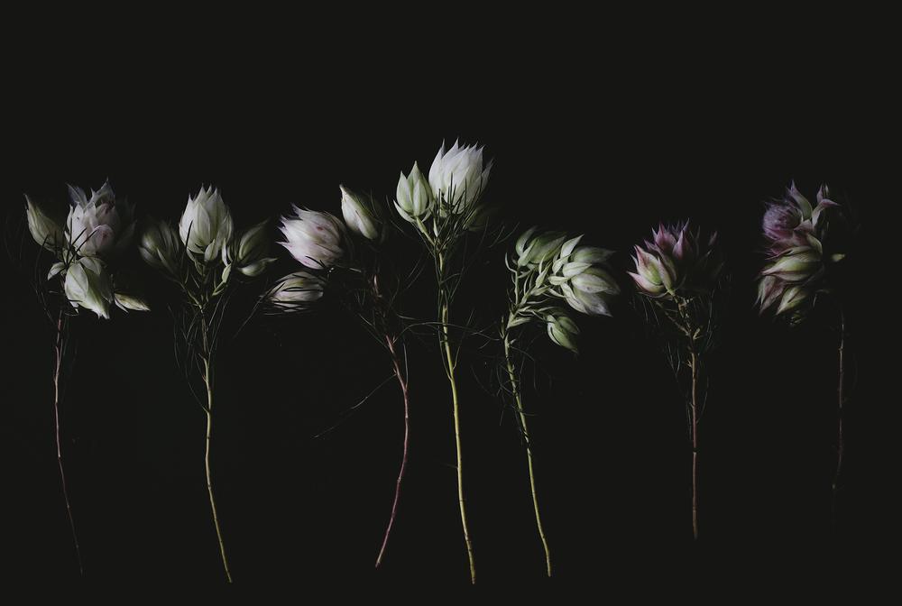 blackblooms.jpg