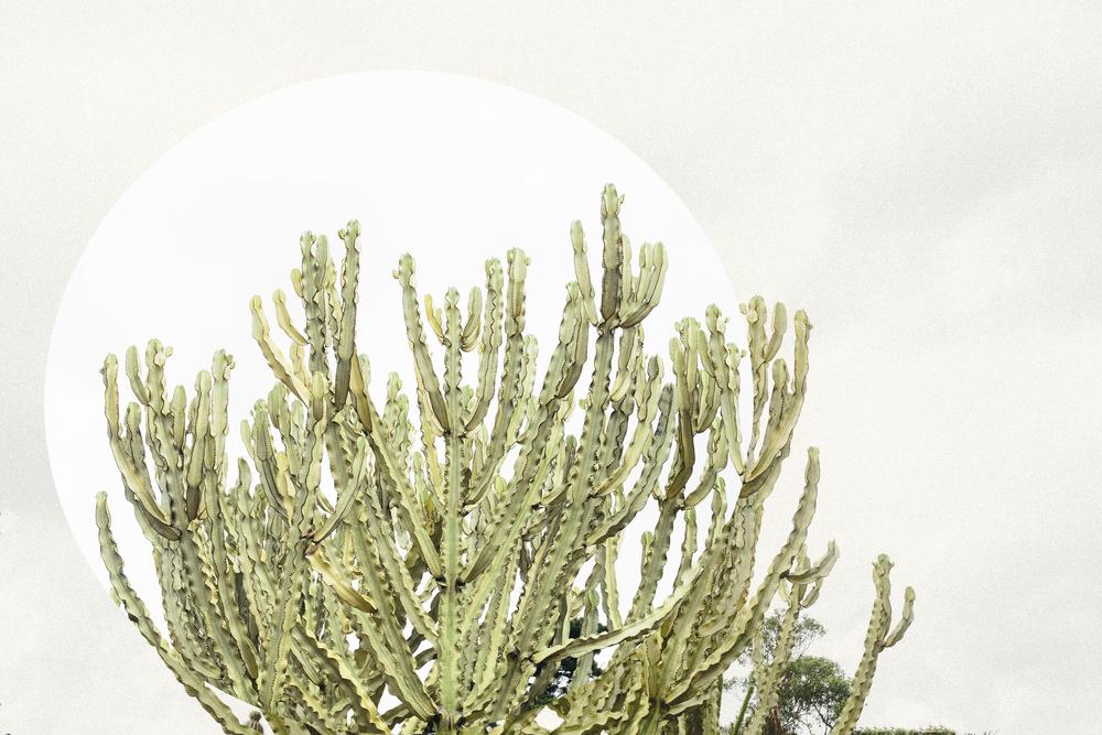 cactuslandscape.jpg