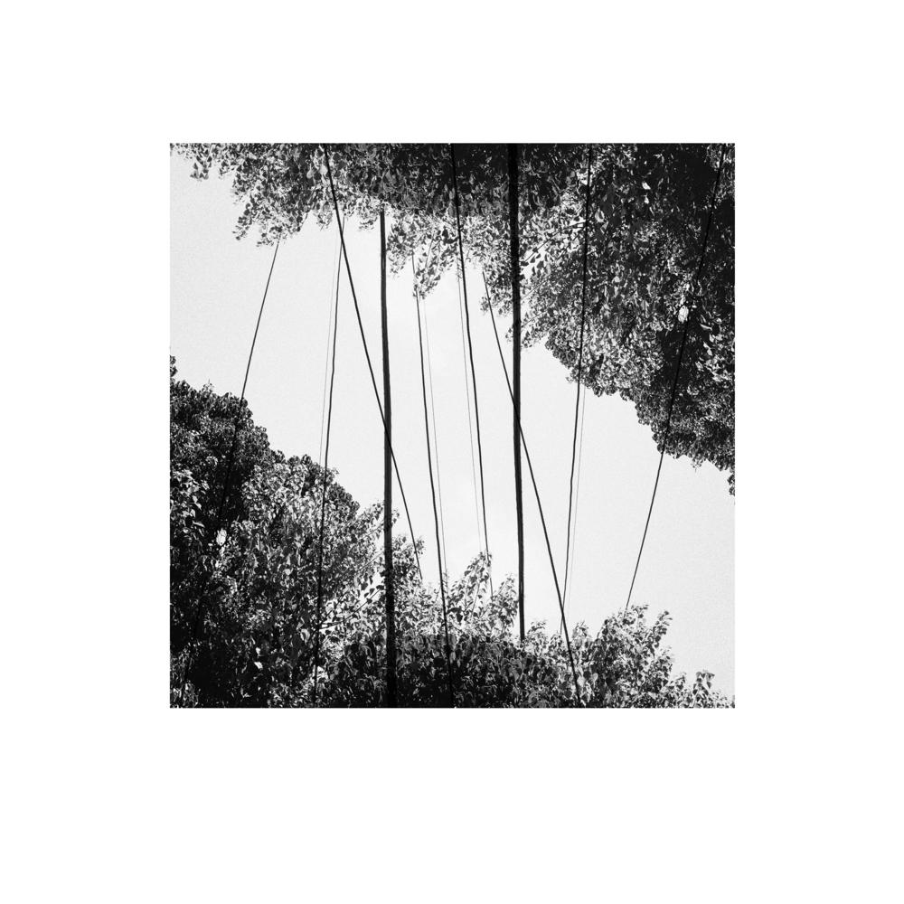 treesandlines.jpg