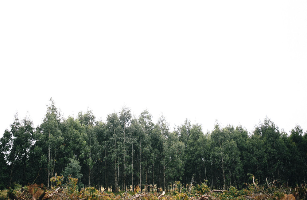 treelines copy.jpg