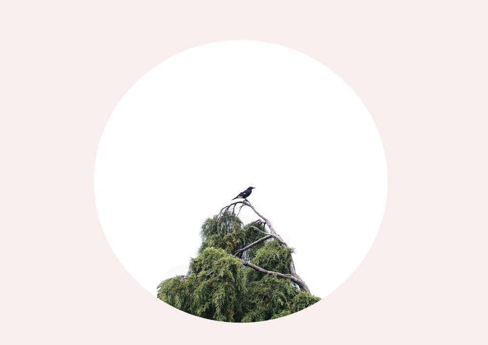 birdcircleinpink.jpg