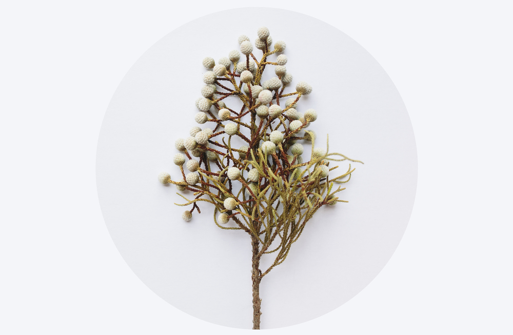 bobbleplantver2.jpg