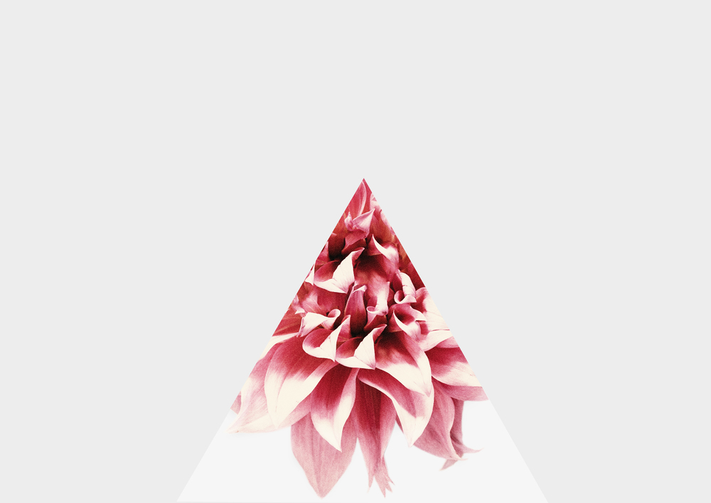 pinktriangle copy.jpg