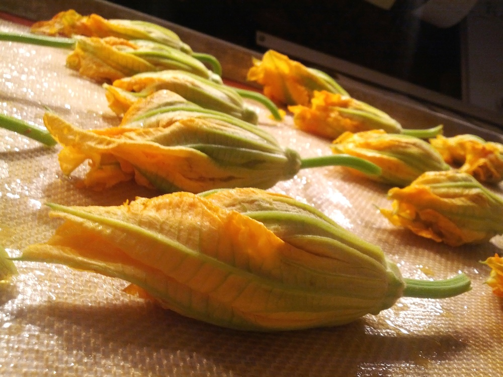Fiori di Zucca, Courtesy of Luke Palladino Seasonal Italian Cooking (2).JPEG