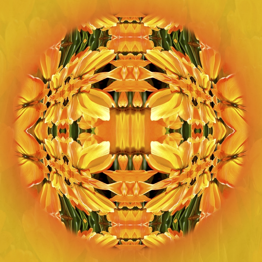 Yellow Tulip Mandala
