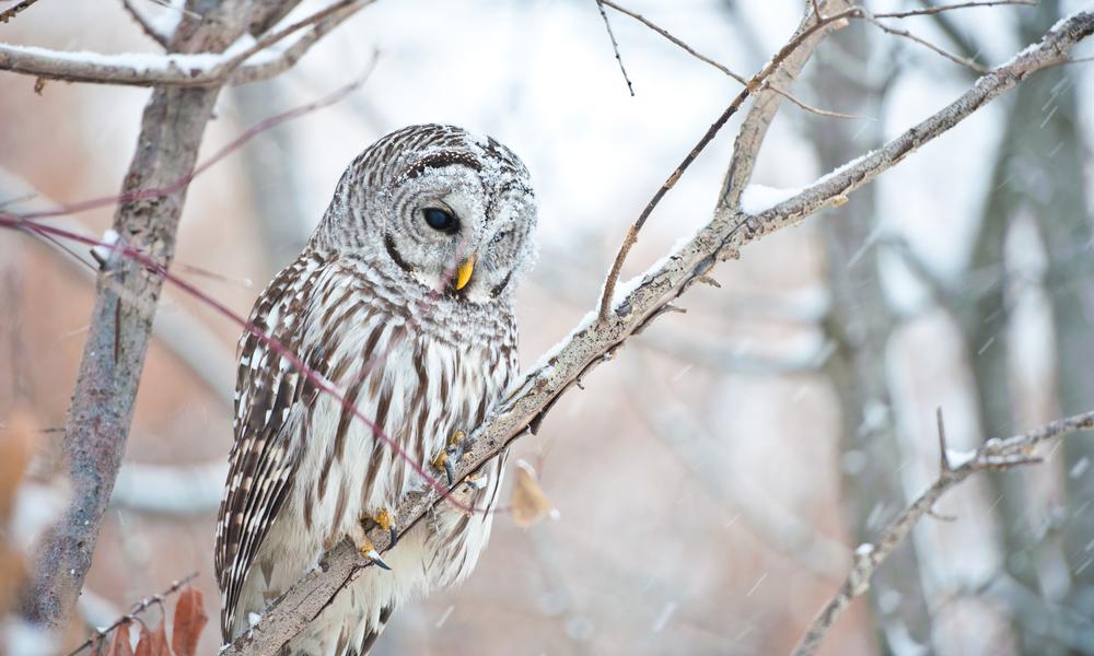owl (3 of 3).jpg