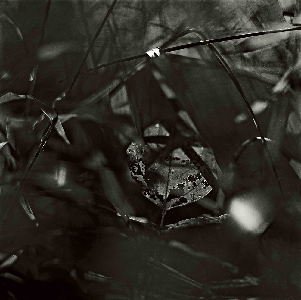 Forest Light #38, 1992 b.jpg