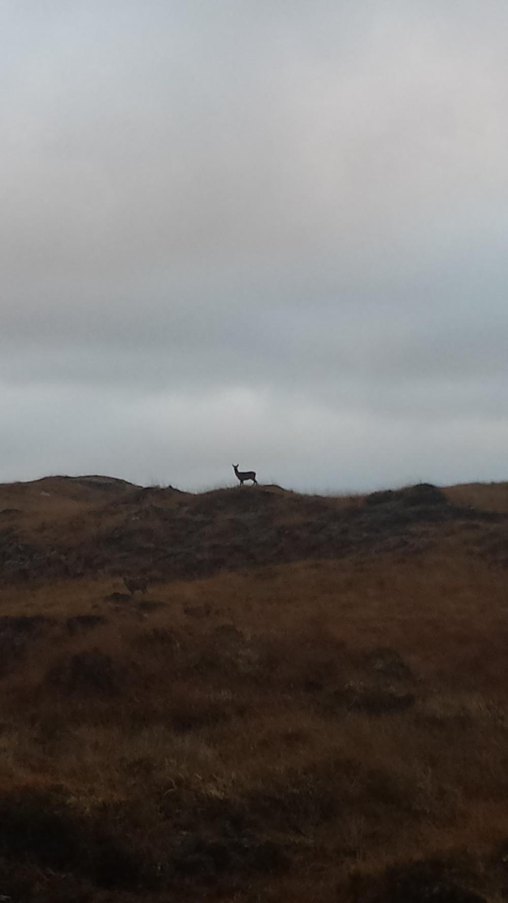 Deer at Poisoned Glen..jpg