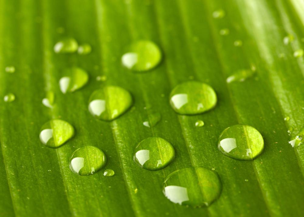 Lotus-leaf.jpg