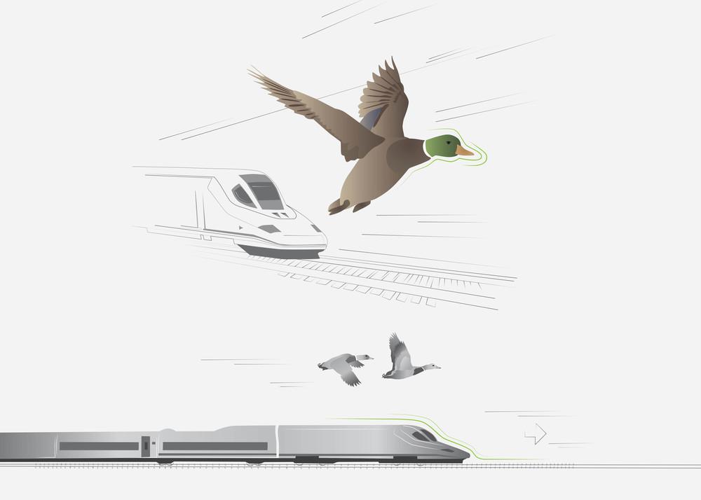 Mallard_Bullet Train_Biomimicry_RLG (1).jpg