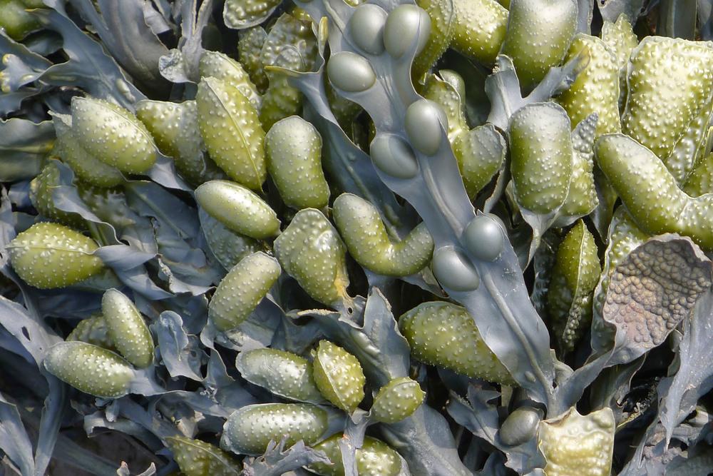 Seaweed by Ross Lovegrove for Moooi