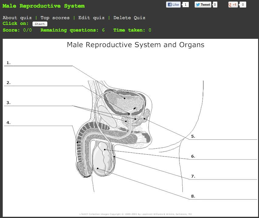Male Reproductive System Labeling Quiz More Information Modni Auto