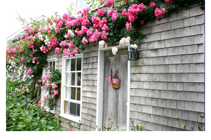 I love the gray colors of the houses and buildings in Nantucket.  Those pink flowers give a burst of color against the weathered gray.