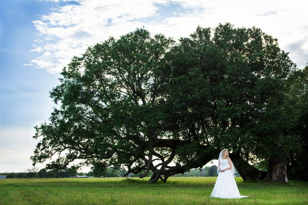 Fallen Tree.  Oak Hollow Farm.  Fairhope, AL.  Gown: Bliss Bridal in Fairhope
