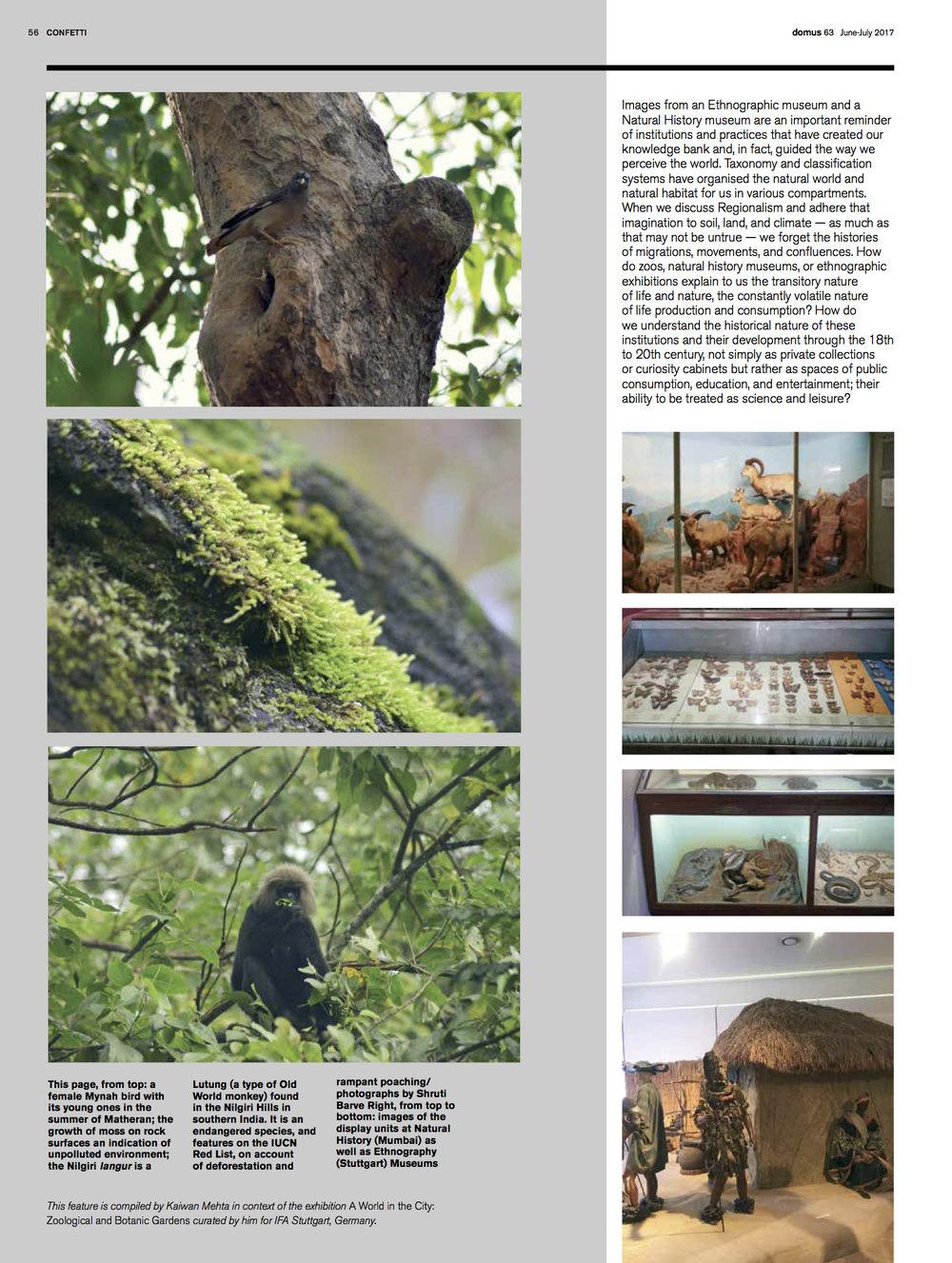 DI_63_Zoo 13.jpg