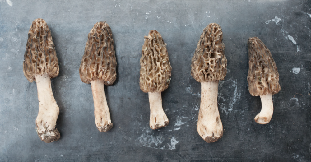 Gorgeous Black Morels we found in southern Indiana..