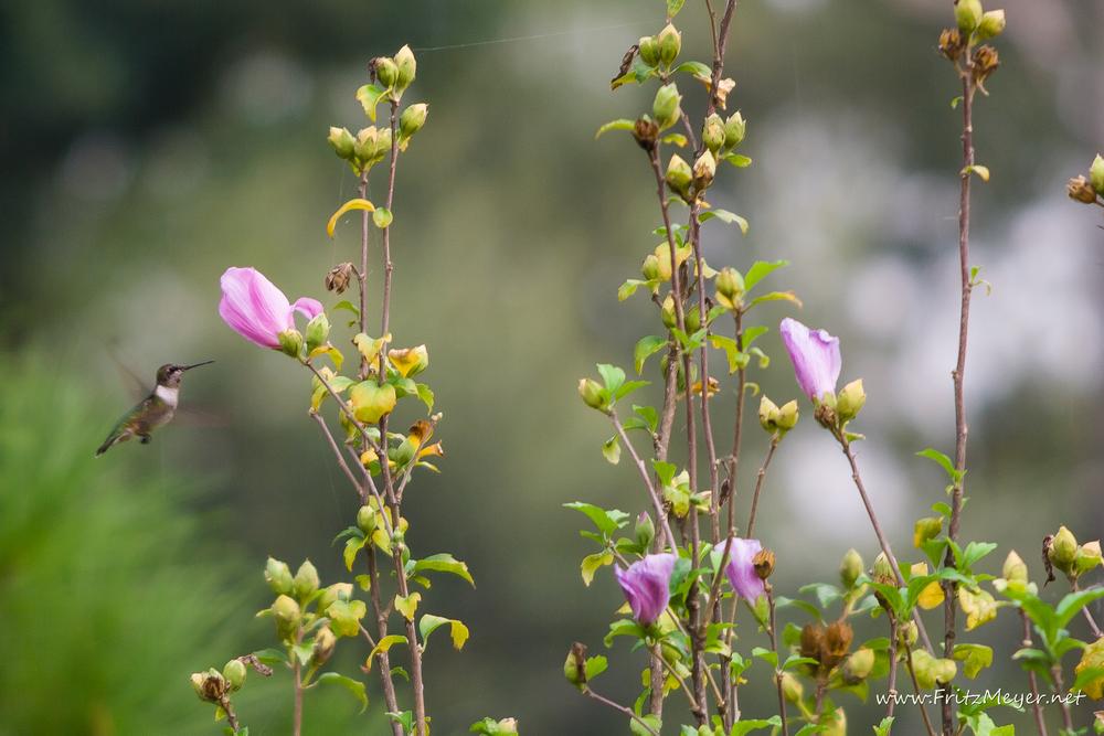 backyard hummer-2560.jpg