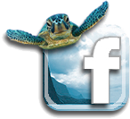 fb_icon5.png
