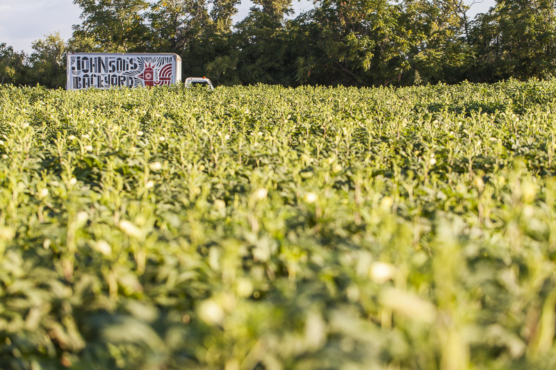 A branded truck sticks up behind a field of tall okra at Johnson's Backyard Garden in Austin, TX.