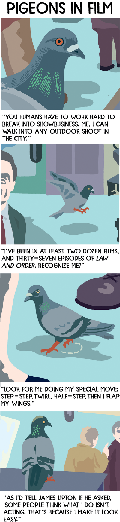 Pigeon-1.png