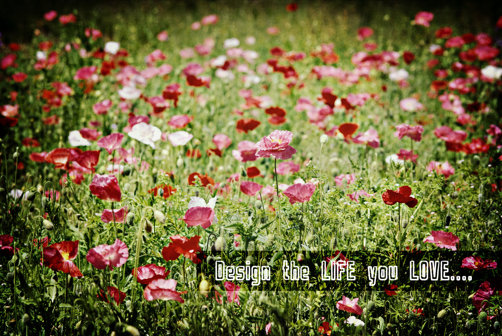 poppies inspiration art.jpg