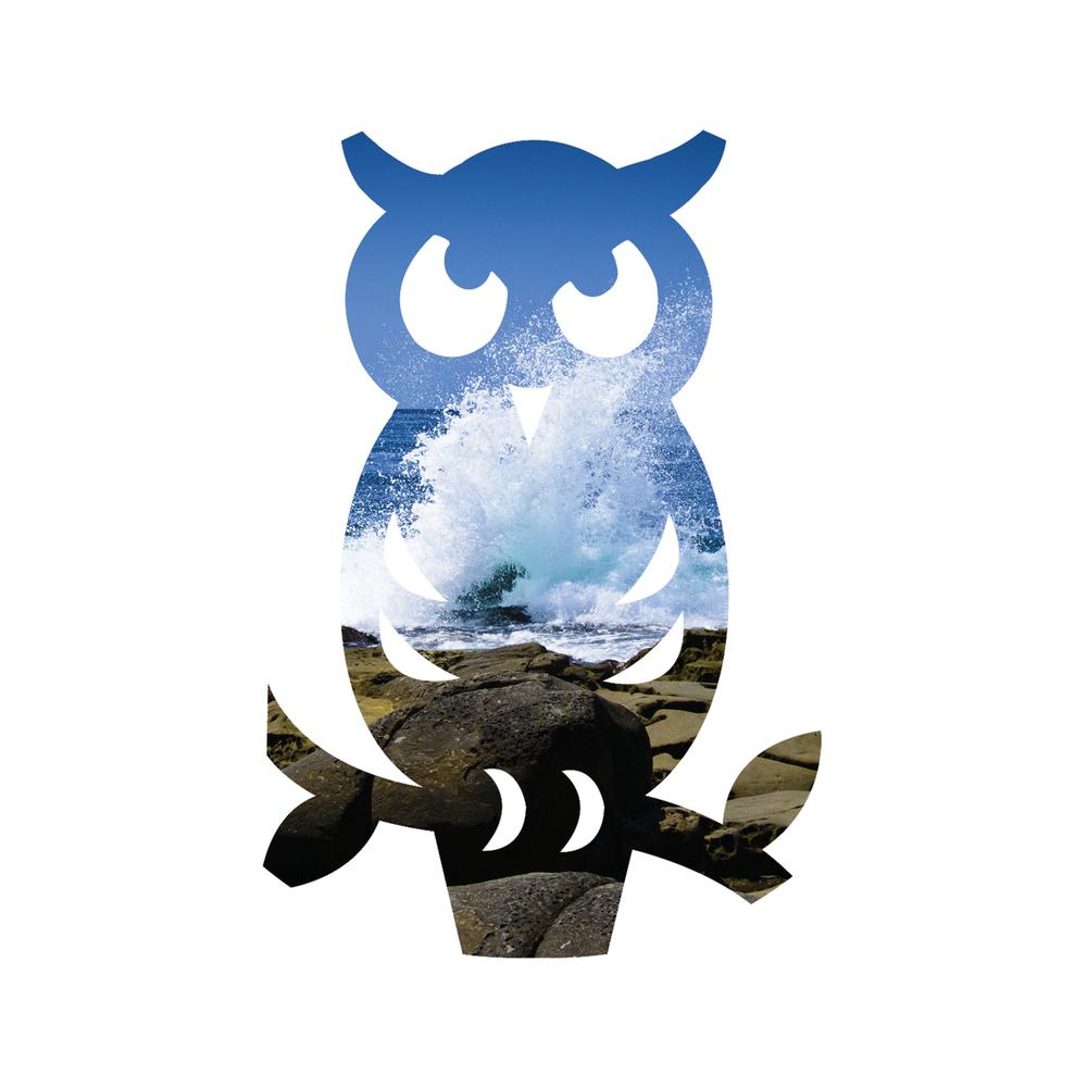Owl_LaJolla_Wave_5x5.jpg