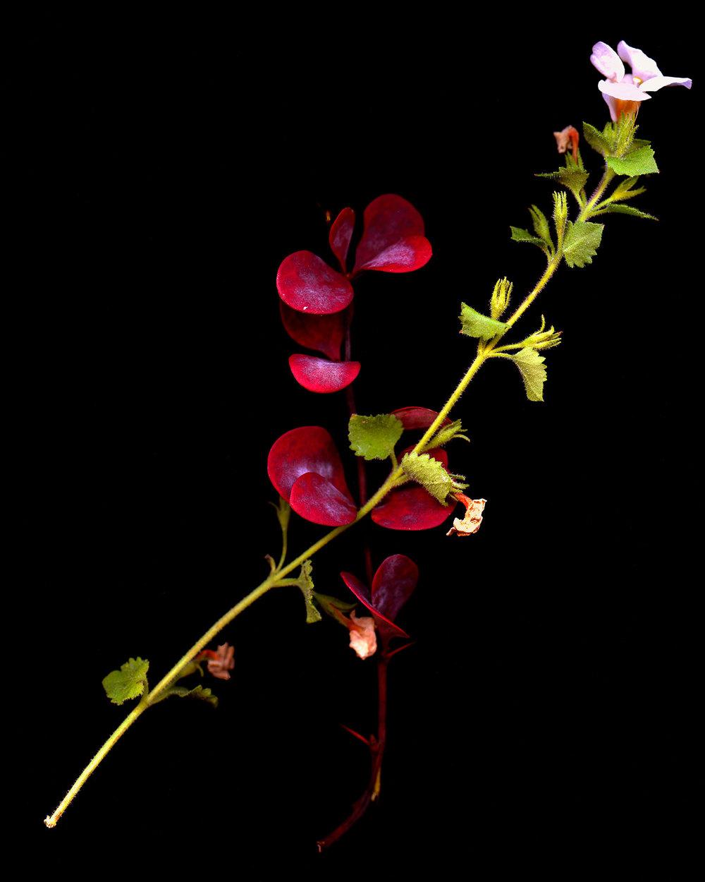 flowers004.jpg