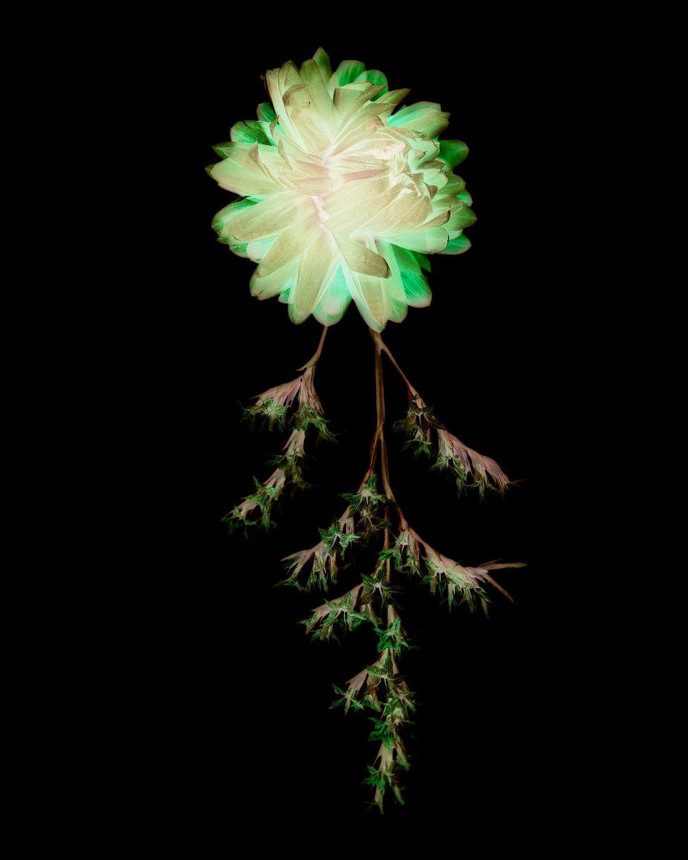 flowers009.jpg