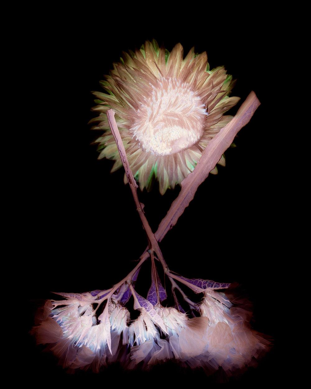 flowers010.jpg