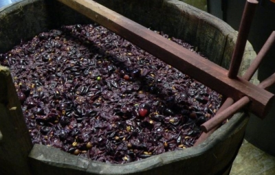 釀紅酒時的皮、核及汁液