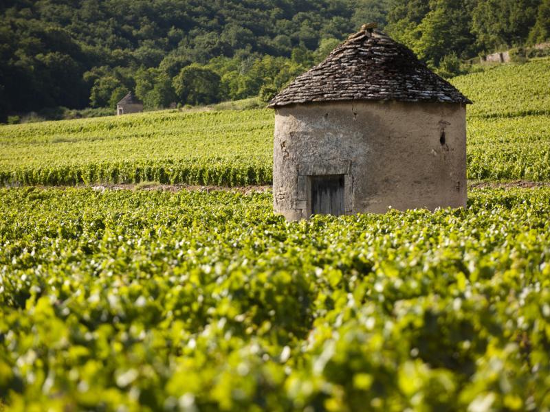 勃艮第以農村風貌為主 copyrighted Beaune Tourisme Michel Joly