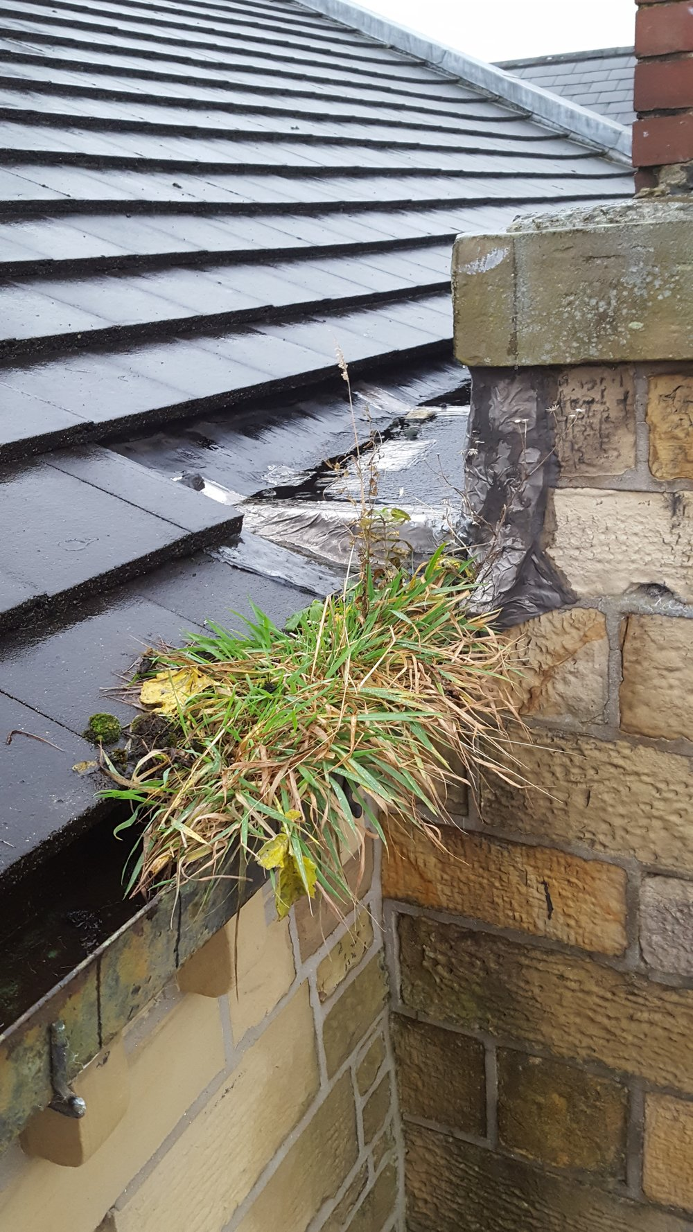 Overgrowth in the Roof Gutters