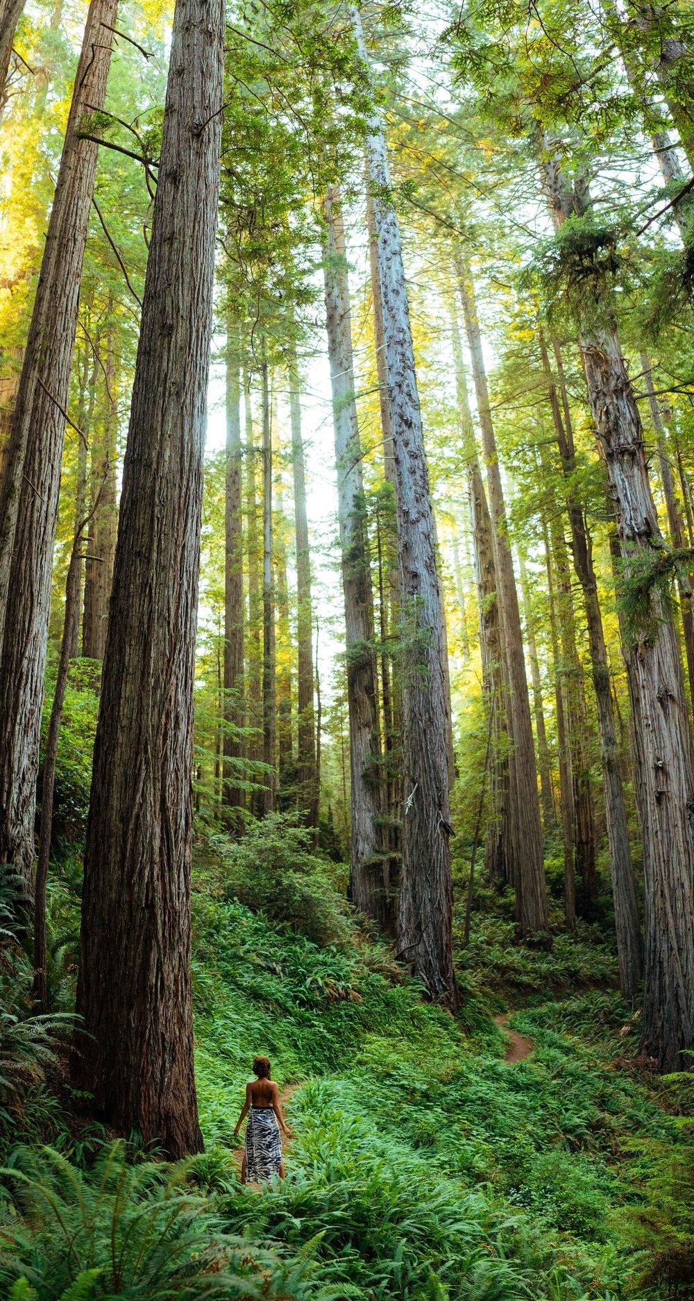 Redwoods Zebra Skirt.jpg
