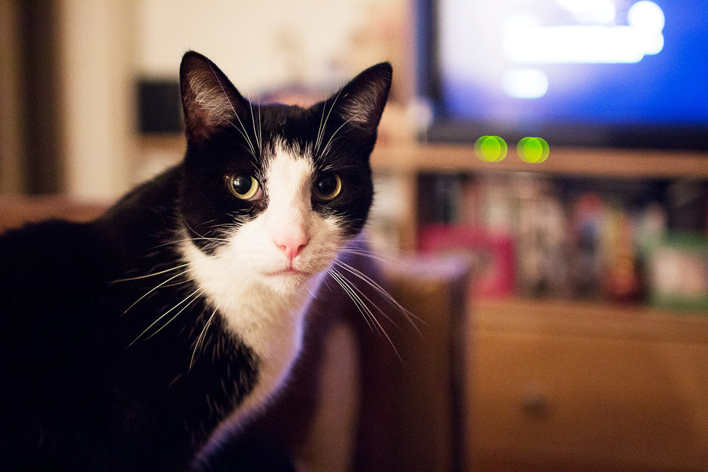 Cat watching television. Photography by Alice Red.