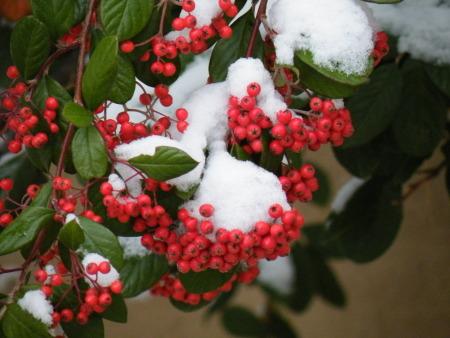 christmas-winter.jpg