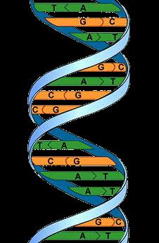Genealogy.jpg.png