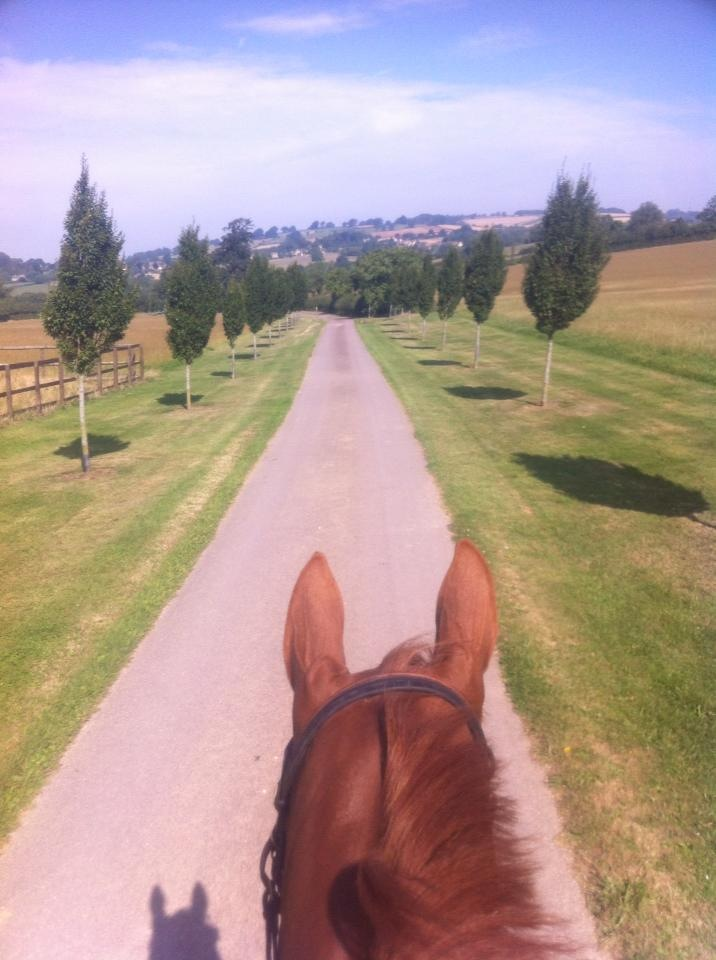 Calrina enjoying a ride out in the sun