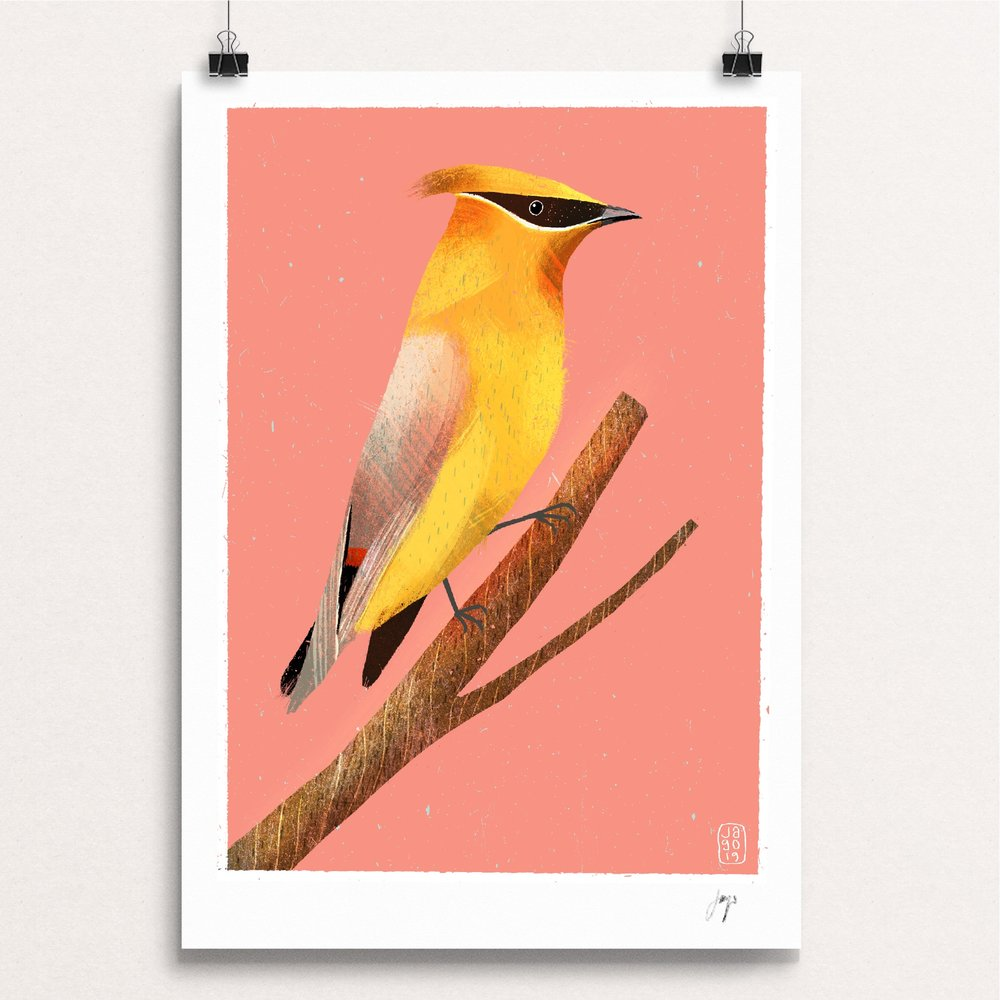 17 20_Winter_Birds_Day_Seventeen_-_Waxwing clips.JPG