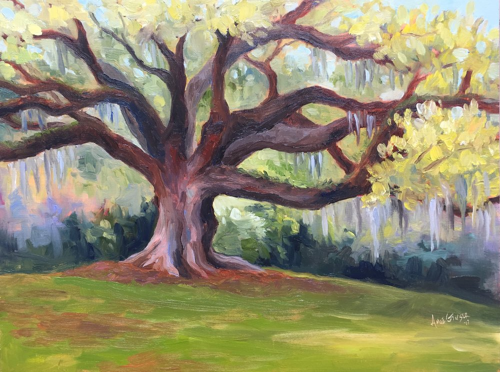Avery Island Oak