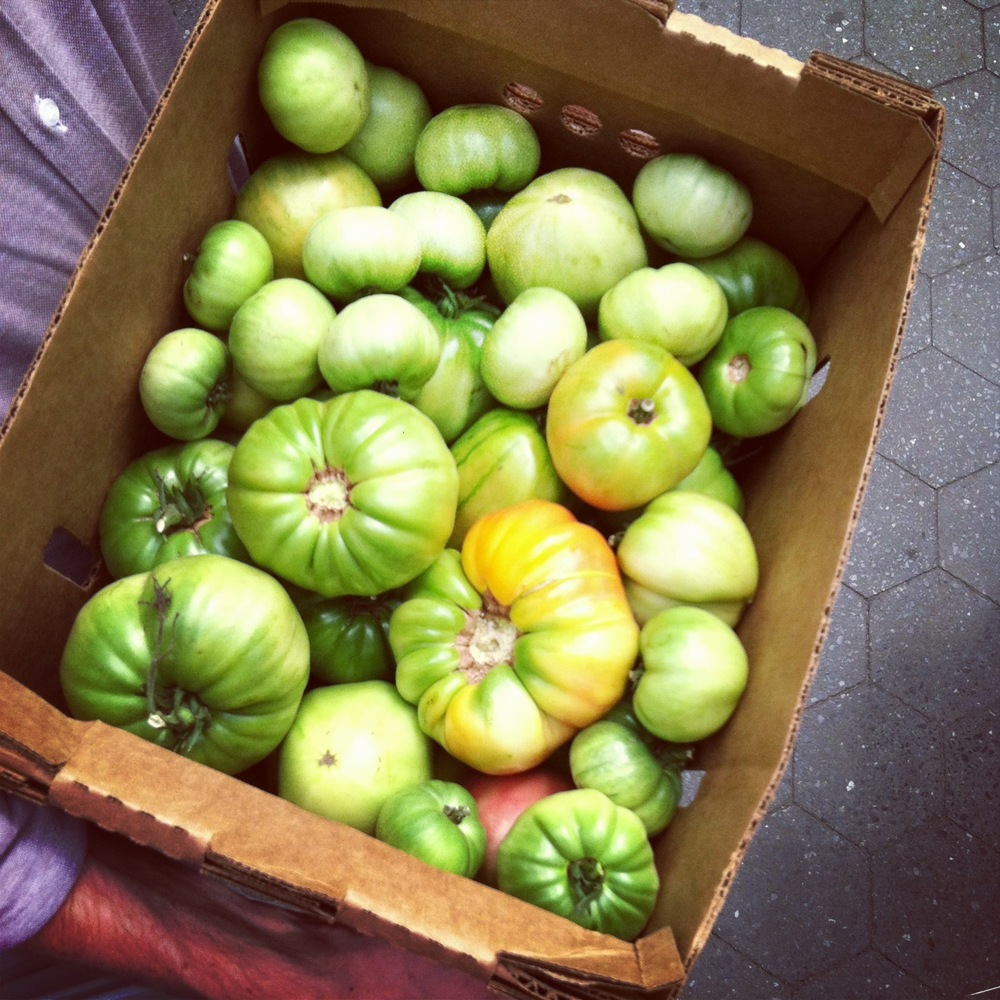 green heirloom tomatoes from Queens County Farm