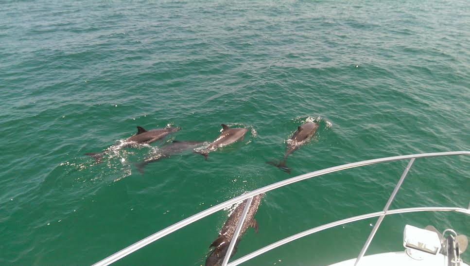 On a cruise at Palm Beach, Cambridge Yacht Group was greeted by 20-30 dolphins, and were escorted by them for 2-3 miles!